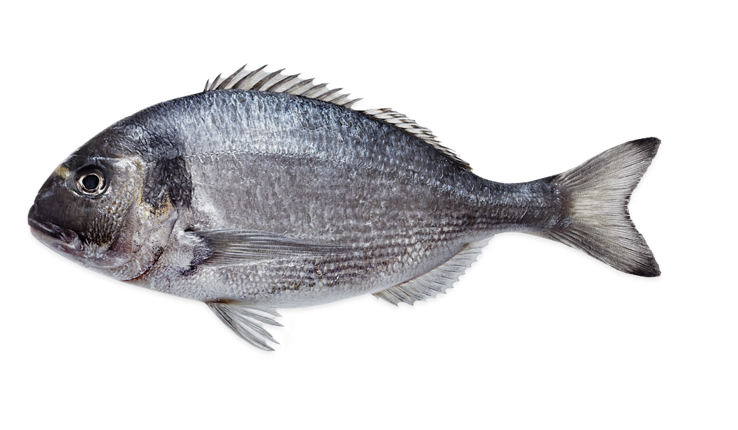 Sea Bream Farmed  - Sparus Auratus