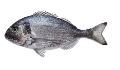 Sea Bream Farmed