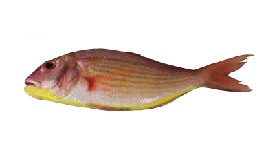 Sultan Ibrahim (Thread Fin Bream)